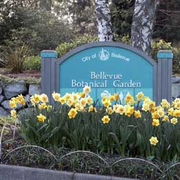 Bellevue WA Botanical gardens