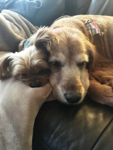 Tina's Dogs Sienna & Mia